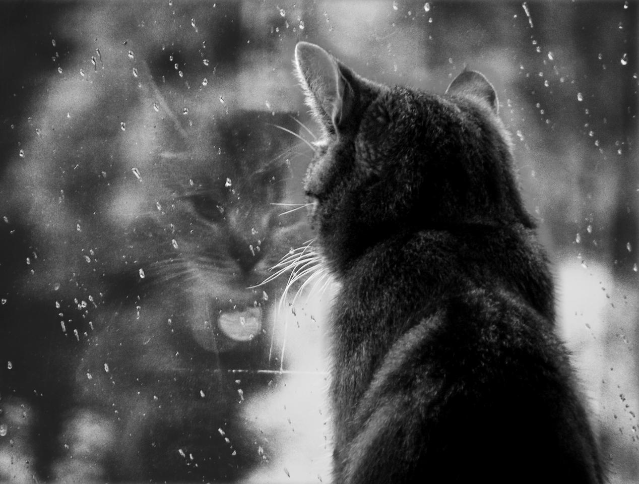 rain__rain__go_away_by_PrettyMoment